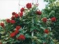 2002-06-02_Praga089