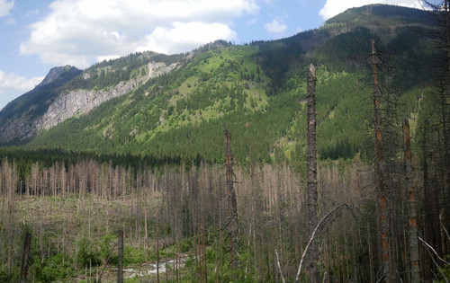 Damaged forest in Tatra Mountains